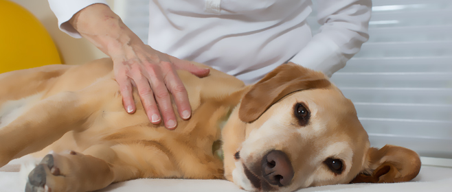 how to become a pet massage therapist