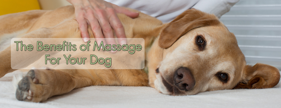 benefits-of-massage-for-dogs2