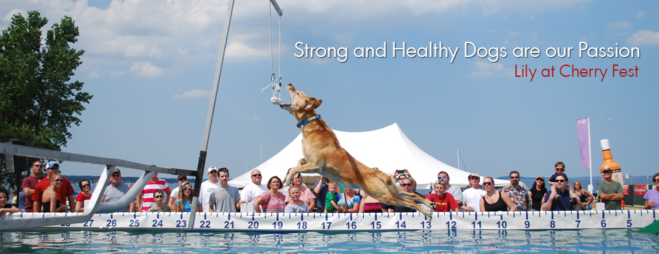 strong-healthy-dogs2