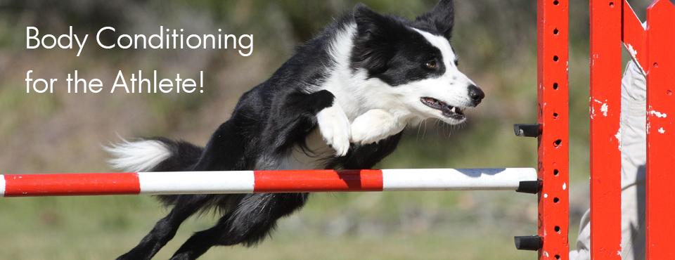 Athletic Dog Graphic