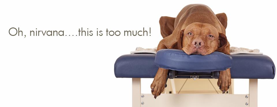 Canine massage graphic